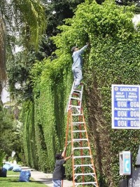 Ladder safety 3