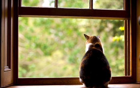 cat-in-window-modernize.com