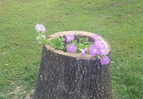 flower-stump-add-mulch