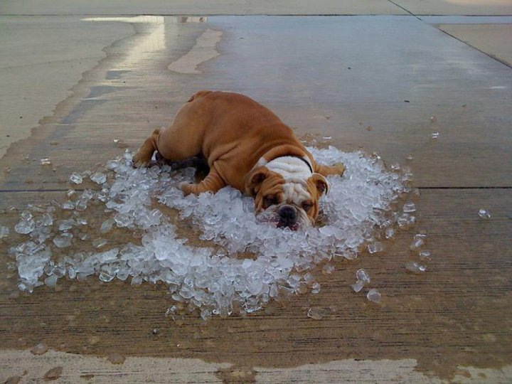 25 ways to keep your cool during a heat wave & beyond