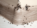 Natural Tips On How To Get Rid Of Ants From Your Home