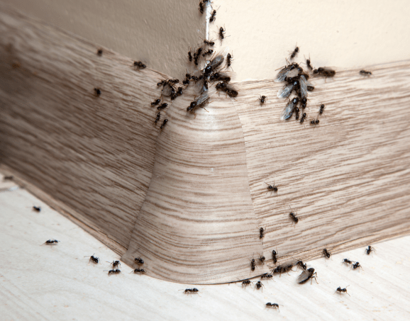 Natural Things To Get Rid Of Ants
